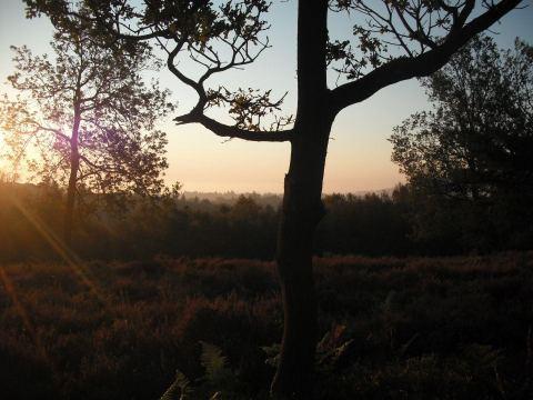 Blackdown hills, Surrey
